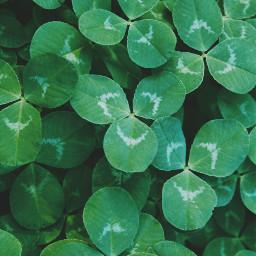 wppgreen freetoedit colors clover stpatricksday