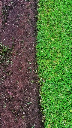 grass earth cleardivision green