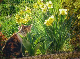 photography nature petsandanimals spring
