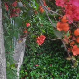 freetoedit art flowers green nature