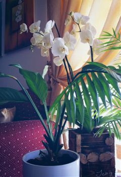 houseplants flower photography myhome