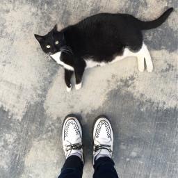 blackandwhite cat friend creepers tuk