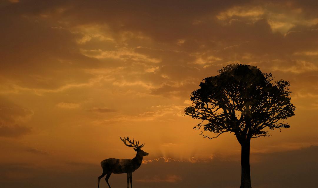 #sunset #africa #freetoedit