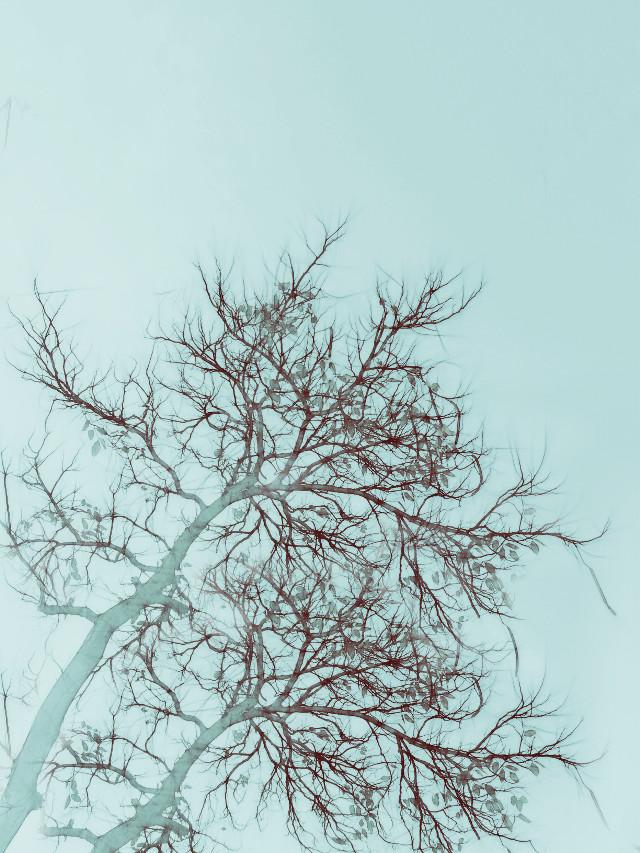 #nature #edit #freetoedit #pencilart #vintageivoryeffect #artistic