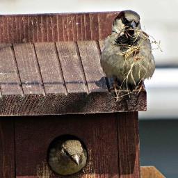 birds finch birdhouse nature wildlife