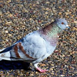 nature petsandanimals photography bird nikon