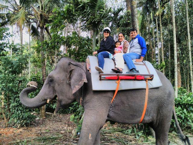 wppzoo animal elephant wppvacation