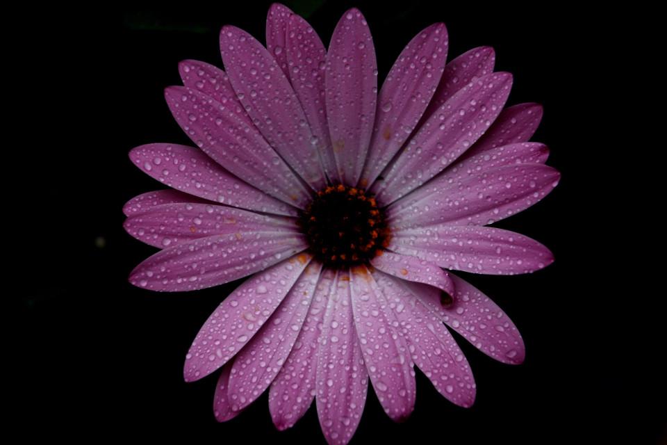 #spring #flower