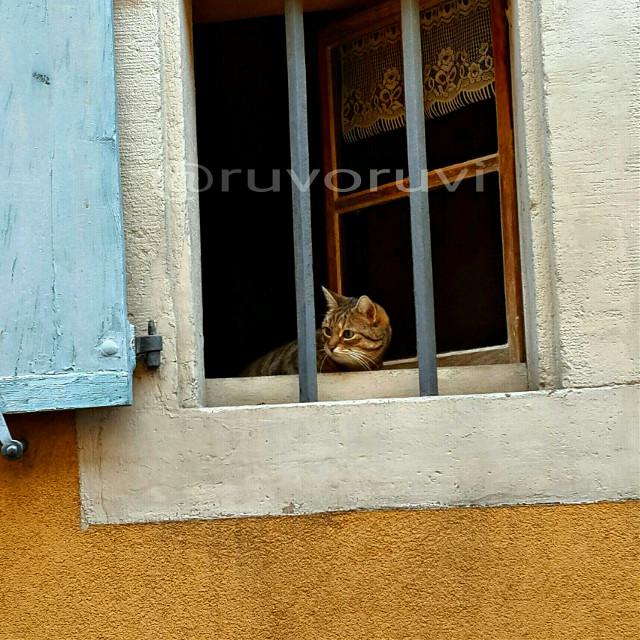 #colmar #france #cats #summer #travel #art #awesome #love #colorful #winter #vintage  #windows #wiev  #world #colorsplash  #street #kedi #animals #cat