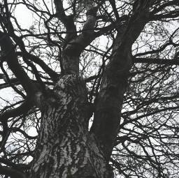 tree blackandwhite nature wdptrees minimal