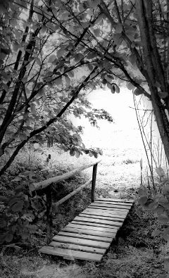 dynamictension bridge wood blackandwhite